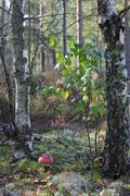 Amanita toadstool closeup - stock photo