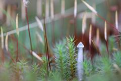 One small toadstool closeup - stock photo