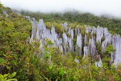 Limestone pinnacles at gunung mulu national park Stock Photos