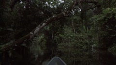 Canoing in rainforest mangrove early morning 2 Stock Footage