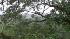 Lowland rainforest canopy view 2 Stock Footage