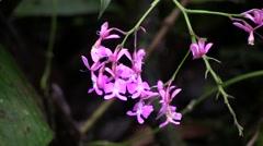 Mountain rainforest flower 1 Stock Footage