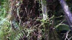 Mountain rainforest 10 Stock Footage