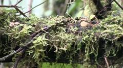 Mountain rainforest 11 Stock Footage
