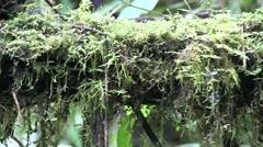 Mountain rainforest 12 Stock Footage