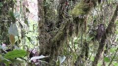 Mountain rainforest 2 Stock Footage