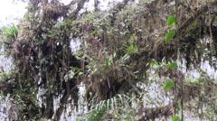 Mountain rainforest 3 Stock Footage
