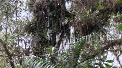 Mountain rainforest 4 Stock Footage