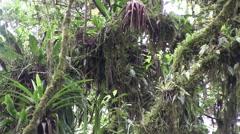 Mountain rainforest 6 Stock Footage