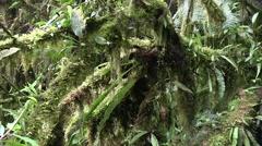 Mountain rainforest 9 Stock Footage