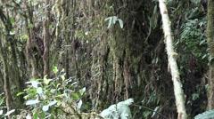 Mountain rainforest 8 Stock Footage