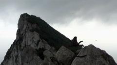 Monkey on Gibraltar rock Stock Footage