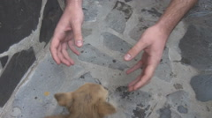 Close up dog owner hands playing beautiful with smallest puppy animal outside - stock footage