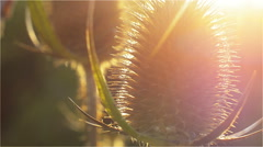 Velcro at the autumn afternoon sun. Very close up Stock Footage