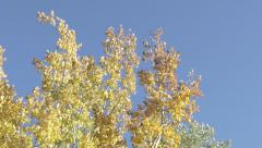 Trees Leaves Blowing In Wind Slow Motion Blue Cloudless Sky Stock Footage