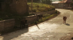 Morning in mountain village - stock footage