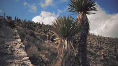 Desert vegetation Stock Footage