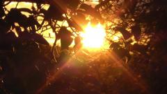 Evening sunlight through autumn leaves Stock Footage