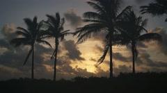 Coconut Trees at Singer Island Beach City Beach Park Riviera Beach Florida Stock Footage