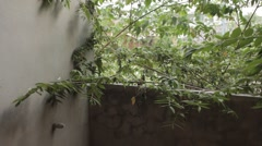 Over Grown Bush Tree Plant On Abandoned Building Hotel Balcony Stock Footage