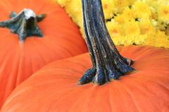 Thanksgiving Pumpkins and Flowers - stock photo