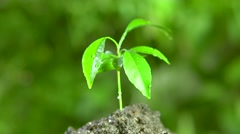 Sprout tangerine tree on a green background. rotation 360 Stock Footage
