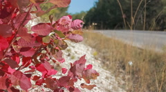 Road between the villages in warm autumn day Stock Footage