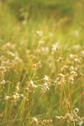 Grass wild flower countryside vintage background - stock photo