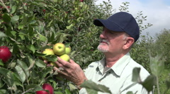 Apple farmer inspecting a variety of apples on apple trees Stock Footage