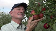 Apple farmer ilooking at apples on a tree, medium shot - stock footage