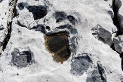 Uniquely stark beautiful Karst landscape of The Burren - stock photo