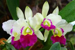 close up orchid in garden, colorful flower - stock photo