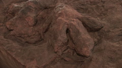 Large dinosaur tracks in fossilized mud Stock Footage