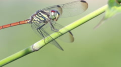 HD footage of Dragonfly in nature green background Stock Footage