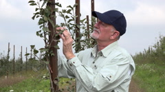Apple farmer inspecting young apple tree - stock footage