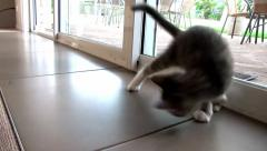 Kitten playing with a plastic straw Stock Footage