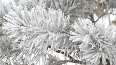 Fir tree is covered by ice Stock Footage