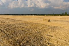 Harvested wheat field Kuvituskuvat
