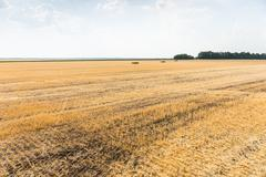 Wheat stubble in a harvested field Kuvituskuvat