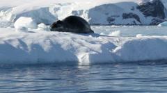 Seal on an Iceberg Stock Footage