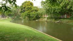 Light rain fall down on pond in park, tropical nature, fine lawn bank Stock Footage