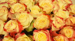 Close up of tan roses - stock footage
