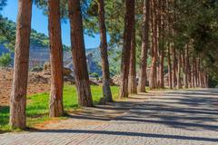 Row of pine trees Stock Photos