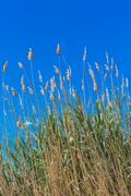 Fluffy grass Stock Photos