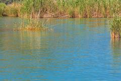 Stock Photo of Lake water with reed
