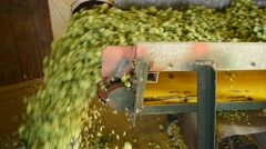 Conveyor belt with hops Stock Footage