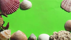 Seashells and Sand on a Green Screen. Stock Footage
