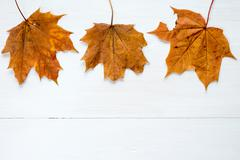 Rusty leaves over wooden background with copy space - stock photo