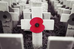 Poppy Cross, Remembrance day display - stock photo