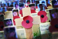 Poppy Cross, Remembrance day display Stock Photos